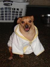 Willy in his spa robe